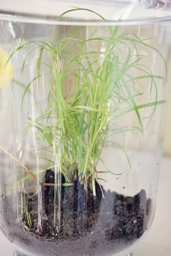 Sumpf im glas beas gedankensprudler designblog for Pflanzen im glas
